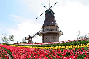 オランダ型風車01