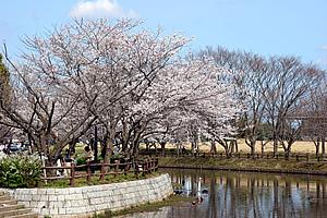 乙戸沼公園03