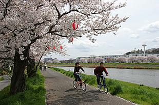 桜川堤03