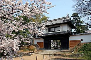 亀城公園の桜01