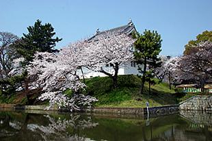 亀城公園の桜02