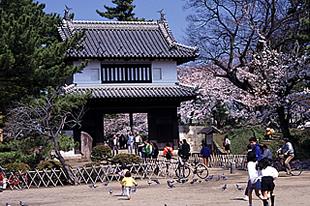 亀城公園の桜03