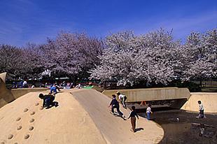乙戸沼公園の桜02