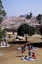 霞ヶ浦総合公園の桜03