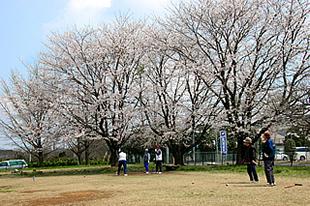 中貫公園の桜01
